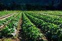 Athena Organic Farm & Eco Retreat Fields